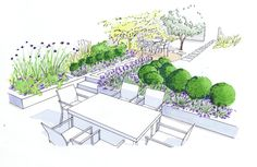 Dining terrace with lavender, box and wildlife friendly planting