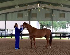 Blindfolded tests. Need covered arena like this so bad at the rescue! #bhfer #helpahorse