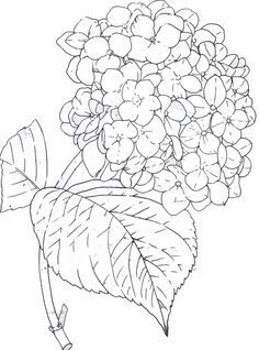 Fabric Painting, Painting & Drawing, Drawing Tips, Colouring Pages, Coloring Books, Free Coloring, Flower Sketches, Flower Drawings, Watercolor Art