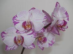 Plants, Orchids, Plant, Planets