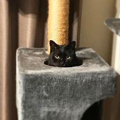 🕳 見てる見てる。 #ねこ #猫 #neko #cat #くろねこ #黒猫 #黒猫が好きすぎる #黒猫同盟 #ねこのいる暮らし #ねこのいる生活 #日本の猫 #blackcat #gatto #chat #kat #gato #katze #macska #catstagram #愛猫 #家猫 #ねこ好き #猫好きさんと繋がりたい #みらん様 #保護猫