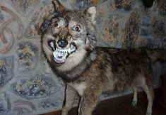 These taxidermy fails are just horrific(ly funny)