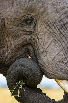 Once you have traveled, the voyage never ends, but is played out over and over again in the quietest chambers. The mind can never break off from the journey. Wildlife Photography, Travel Photography, Kwazulu Natal, Volunteer Abroad, African Elephant, Volunteers, Mammals, Safari, Travelling