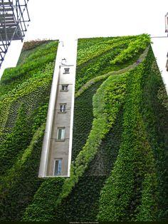 V australském Sydney roste nejvyšší vertikální zahrada na světě – Novinky.cz