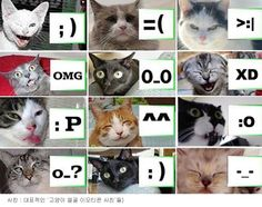 cats feat. emoticon