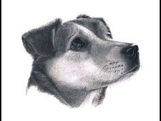 A short video on drawing dogs fur in graphite pencil and the materials used. Colorful Drawings, Colorful Pictures, How To Draw Fur, Painting & Drawing, Drawing Fur, In The Zoo, Dog Eyes, Face Art, Art Faces