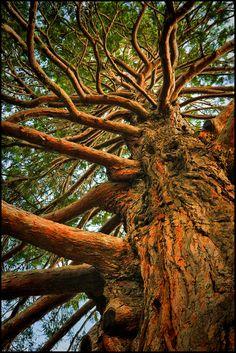 #queenstown #newzealand #gigatownqtn An amazing tree sitting near the lake in Queenstown, New Zealand. (via Pogon)