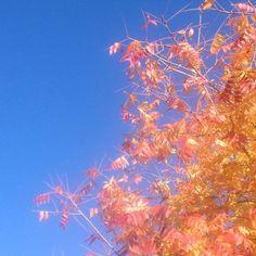 Breeze. #nature #sky #mindfulness #tree #autumn #seasons #movement #light
