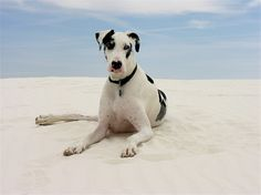 5 Ways to Prevent Dog Sunburn: Dog Sunscreen, Sunsuits & More
