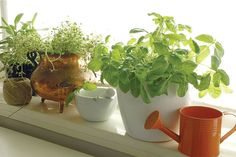 Many indoor gardeners have their precious plants blooming in 3-gallon or 5-gallon plastic pots. https://www.maximumyield.com/low-maintenance-hydroponics-self-watering-containers/2/975 For more information please visit xpertomatic https://xpertomatic.com #