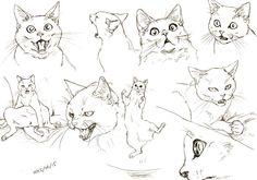 """ふゆきさんさんはTwitterを使っています: """"猫スケッチ。これは写真見て描いたやつ。口開けてる猫の顔ってたまらんですよなぁ…。 http://t.co/25VuaTwyBR"""""""