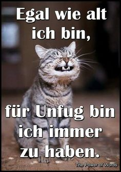 Non importa quanti anni ho, sono sempre pronto per il male. Cat Memes, Funny Memes, Jokes, I Miss My Cat, Tierischer Humor, Gatos Cats, Picture Fails, Cat Wallpaper, No Me Importa