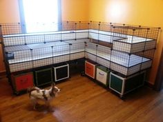 Build Guinea Pig Cage | Ultimate guinea pig cage. Chris Dunn - make this! Please! | Cute ideas