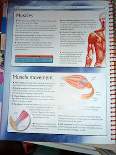 Muscular System Ideas