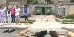 """NOS ENFANTS ADORENT LES ANIMAUX ...LES LEURS ONT APPRIS A LES DETESTER ...La roumanie est entrée dans l'union européenne. Pourtant, elle ne respecte aucunement les lois européennes concernant le droit animal. Chaque jour, des chiens des rues et des fourrières sont massacrés. Ils meurent dans des conditions atroces, agonisent. Ceux qui sont attrapés sont traumatisés à vie, ils attendent la mort et quelle mort .... Sans commentaire. Le gouvernement paie des gens pour faire ce """"sale boulot""""…"""