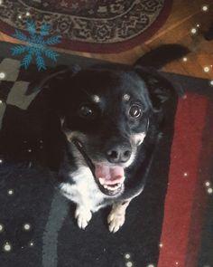 My sweet dog Iguś 💕