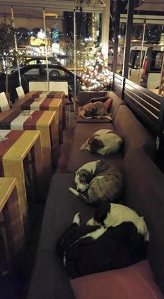 A photo of stray dogs sleeping in a coffee shop to shelter themselves from the cold is going viral due to the compassion displayed in the image. | This Cafe Opens Its Doors To Let Stray Dogs Sleep Inside During The Winter