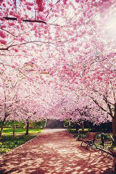 HELDAG I GÖTEBORG Beautiful World, Beautiful Places, Urban Stories, Spring Aesthetic, Gothenburg, Safari, Mother Earth, The Great Outdoors, Paris