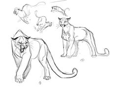 Cougar Illustration Concepts_1 by ~davidsdoodles on deviantART Animal Sketches, Animal Drawings, Cool Drawings, Funny Drawings, Art And Illustration, Illustration Animals, Cat Drawing, Drawing Sketches, Wow Art
