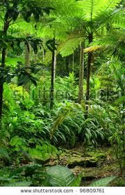 tropical gardens queensland - Google Search