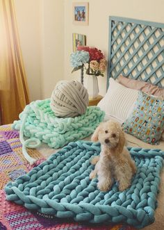 big cotton for dogs
