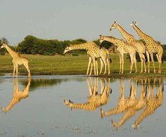 Beauty ... reflected.