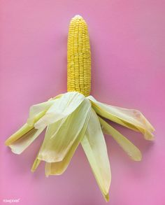 Yellow raw corn in a pink background | free image by rawpixel.com