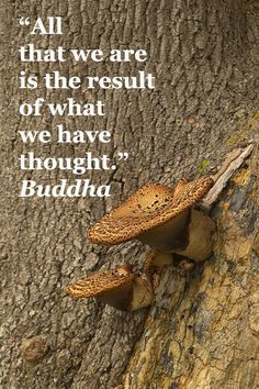 """All that we are is the result of what we have thought."" – Buddha – On image of shelf mushrooms in Great Britain taken by Dr. Joseph T. McGinn – Enjoy evocative inspirational quotations about family, life, and learning at http://www.examiner.com/article/fifty-quotations-inspire-education-and-learning"