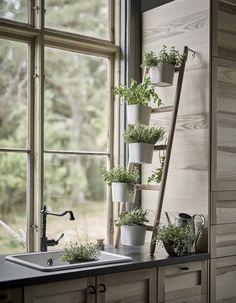 Une décoration végétale via des plantes aromatiques en cuisine