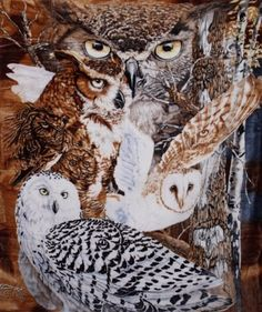 $34 Signature Collection 11 Owls Super Soft Plush Queen Size Blanket By Gardner by K2, http://www.amazon.com/dp/B0046Y7Y82/ref=cm_sw_r_pi_dp_moAVrb1JNCGFF