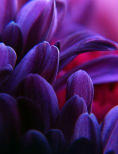 Photography Macro purple flower petals
