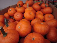We still have some small and medium-sized PUMPKINS available today! Lots of last minute calls - don't panic - come see us at 662 Montreal Street.