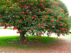 Hope to grow my coral tree to a healthy strong size