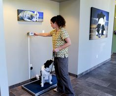 Building your #veterinary practice color palette - Hospital Design - dvm360