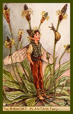 The Ribwort Plantation Fairy by Cicely Mary Barker from the 1920s. Quilt Block of vintage fairy image printed on cotton. Ready to sew.  Single 4x6 block $4.95. Set of 4 blocks with pattern $17.95.