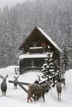 Cabin in the snow, nature, trees, deer Winter Cabin, Cozy Cabin, Log Cabin Homes, Log Cabins, Barn Homes, Little Cabin, Winter Scenery, Snow Scenes, Cabins And Cottages