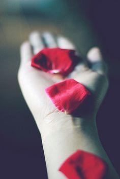 """conserva-tus-colores: """"sin título on Flickr. """"  #conservatuscolores #romantic #love #pétalos #roses #perspective #manos"""