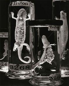animal embryos