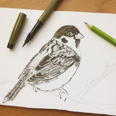 For all the bird lovers out there! . Tree sparrow created by Diana with: Sailor Fude Nagomi Brush Pen http://to.jetpens.com/2dtEwpt Staedtler Wopex Eco Pencil http://to.jetpens.com/2cjOCLn . Clickable link in Instagram profile! . #instajetpens #inktober #inktober2016 #jetpensforinktober #sailorbrushpen #staedtlerwopex #wopex #treesparrow #birddrawing #birdart #brushpen