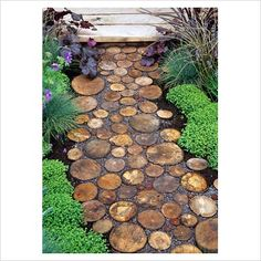 GAP Photos - Garden & Plant Picture Library - Garden path from sliced Logs with gravel infill, Chelsea FS - GAP Photos - Specialising in horticultural photography