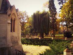 O poveste de succes la Castelul Karolyi din Carei - Din mansarda Romania, Plants, Plant, Planting, Planets