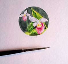 Lady Slipper miniature, watercolor and pencil, by Liz Carlson Arts and Illustration, 2015