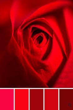 ZJ Colour Palette 622 #colourpalette #colourinspiration