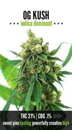 You can simply log in to the online portal and pick up all the amount of weed that you need. Cannabis Seeds For Sale, Cannabis Oil online and a lot more .  To place and order: Website: http://www.realweedshop.com