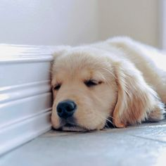Throwing it back to the sleepy puppy days Cute Dogs And Puppies, I Love Dogs, Doggies, Dog Photos, Dog Pictures, Go Feminin, Baby Animals, Cute Animals, Puppy Day