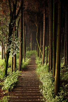 I love ancient places or places that look ancient and mysterious. Must be the fantasy lover/author in me. Forest Path, Chengdu, China via Tipvon Chengdu, Oh The Places You'll Go, Places To Travel, Places To Visit, Beautiful World, Beautiful Places, Beautiful Sites, Forest Path, Forest Trail