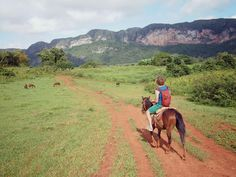 Do you want to visit one of the most beautiful corners of Cuba? Then you should put Vinales on your to-do list. Travel Around The World, Around The Worlds, Vinales, Cuba Travel, Study Abroad, Horse Riding, Horses, Mountains, Awesome