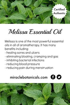 Melissa essential oil is one of the most powerful essential oils in aromatherapy. Some of its many benefits include healing sores and ulcers, eliminating bloating, cramping and gas, reducing blood pressure and reducing pain during menstruation. New Product! Our Pain Formula is a synergistic blend of some of the most therapeutic and highly recommended essential oils for pain and inflammation in a base of rejuvenating Foraha oil.
