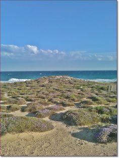 wild beach, Taranto (Italy)