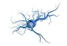 Key Myelin Protein Seen in MS Patients' Brains to Break Down Differently